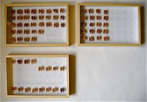 Collezione di farfalle  2011